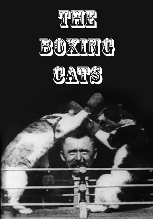 Filmplakat von The Boxing Cats (Prof. Welton's)