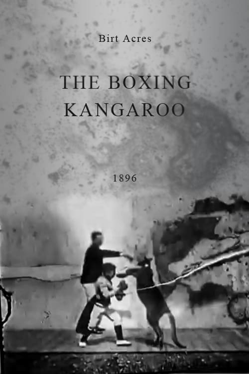 Movie poster of The Boxing Kangaroo